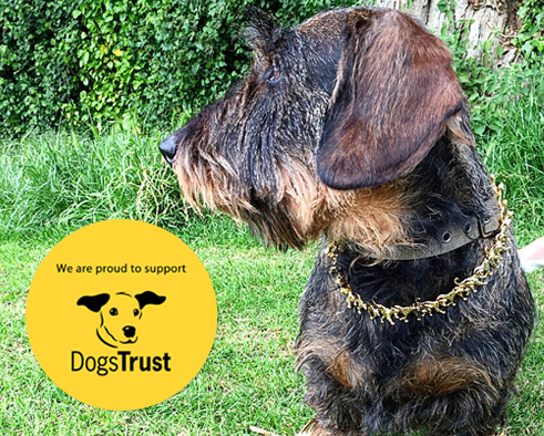 Dogs Trust Offer